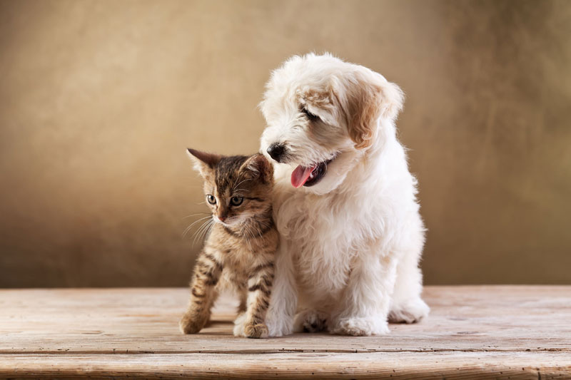Adopt a puppy sydney