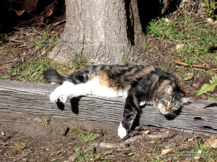 Adopt A Cat Sydney