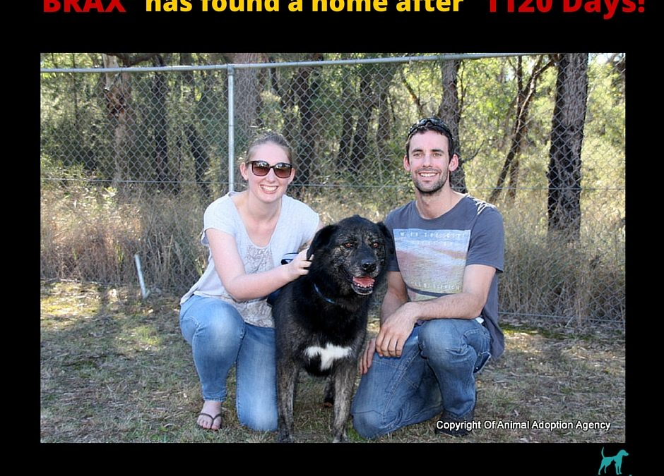 Brax finds a home after 1120 days!!